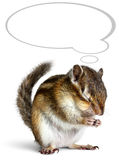 Funny chipmunk dreaming with thought bubble royalty free stock images