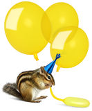 Funny chipmunk inflating yellow balloons. Wearing birthday hat Stock Image