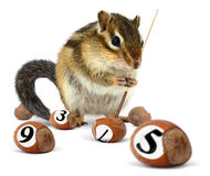 Funny chipmunk playing snooker Royalty Free Stock Photo
