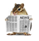 Funny Chipmunk Read Newspaper Stock Photos