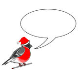 A funny Christmas bullfinch with a speech bull Stock Image