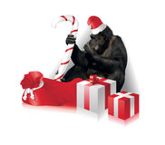Funny christmas card Royalty Free Stock Image