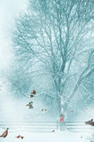 Funny Christmas card background. Royalty Free Stock Photography