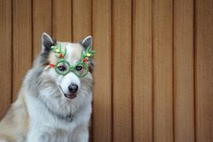 Funny christmas decoration on mixbreed dog head. With timber background stock images