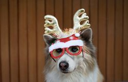 Funny christmas decoration on mixbreed dog head. With timber background stock photos