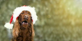 Funny Christmas dog banner. Website banner of a funny Christmas dog with Santa Claus hat Royalty Free Stock Images