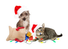 Funny Christmas Dog and Cat. Funny dog and cat wearing Santa hats with presents and lights Royalty Free Stock Photography
