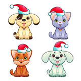 Funny Christmas dogs and cats Stock Photos