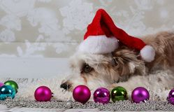 Funny christmas dogs. With deco in the studio stock image