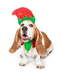 Funny Christmas Elf Basset Hound Dog Royalty Free Stock Photography