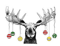 Funny Christmas Moose with ornaments. Funny hand drawn Christmas sketch illustration of moose trophy head scene with Christmas ornaments and decorations hanging vector illustration