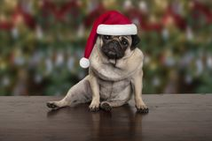 Funny Christmas pug puppy dog sitting down on wooden ground, wearing santa claus hat. Seasonal background Royalty Free Stock Image