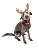 Funny Christmas Reindeer Dog Stock Images