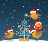 Funny Christmas Robins Royalty Free Stock Images