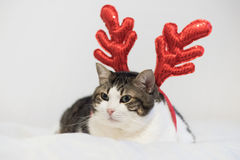 Funny christmas rudolph reindeer cat, lying on a blanket. Stock Photo