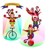 Funny circus Monkey Royalty Free Stock Image