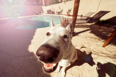 Funny Closeup Of Cute Dog In Back Yard Stock Photos