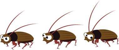Funny cockroach walking Royalty Free Stock Image