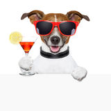 Funny cocktail dog banner. Funny cocktail dog behind a white banner Stock Photo
