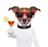 Funny cocktail dog. Holding a martini glass stock photography