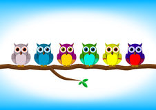 Funny colorful owls in a row. Funny colorful owls row on the branch Stock Image