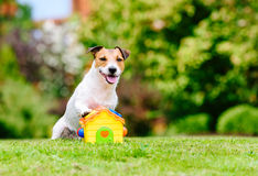 Funny concept of family house and real estate with dog and toy house. Dog sitting on lawn with paw on toy house Royalty Free Stock Images