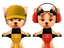 Funny couple of animal with jackhammer. Funny couple of puppies holding jackhammer, isolated on white. Teamwork and cooperation concept. Realistic 3D Stock Images