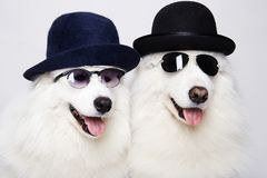 Cute doggy family in hats and sunglasses Stock Images