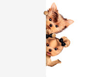 Funny couple of puppies holding empty banner. Isolated on white. Community and friendship concept. Realistic 3D illustration Stock Image