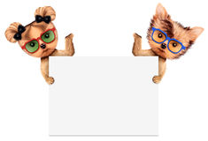 Funny couple of puppies holding empty banner Stock Images