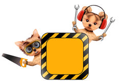 Funny couple of puppies with tools holding construction warning sign. Funny couple of puppies with earphones, protective goggles, saw and wrench holding Royalty Free Stock Photos