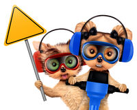 Funny couple of puppies with tools. Funny couple of puppies with warning sign, protective goggles and earphones holding jackhammer, isolated on white. Teamwork Stock Image