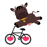 Funny cow on a bicycle. Funny cartoon cow on a bicycle stock illustration