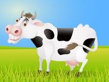Funny Cow cartoon Royalty Free Stock Image
