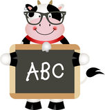 Funny Cow Teacher Stock Photos