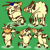 Funny cows Royalty Free Stock Image