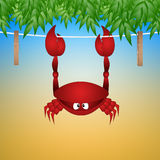 Funny crab hanging Royalty Free Stock Images