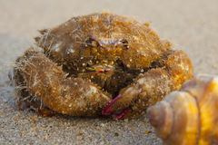 Funny  crab Stock Image