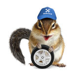 Funny craftsman chipmunk with auto tire Stock Image