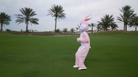 Funny crazy easter bunny life size costume or rabbit having fun on grass or garden. Happy hare celebrates easter.  stock video