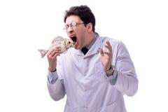 Funny crazy professor paleontologyst studying animal skeletons i. Solated on white royalty free stock image