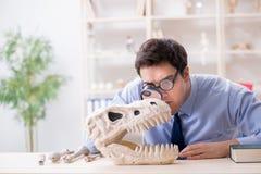 The funny crazy professor studying dinosaur skeleton. Funny crazy professor studying dinosaur skeleton royalty free stock photos