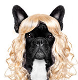 Funny crazy silly carnival dog royalty free stock photography