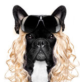 Funny crazy silly carnival dog Royalty Free Stock Photos