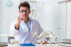The funny crazy student doctor studying animal skeleton. Funny crazy student doctor studying animal skeleton Stock Photography