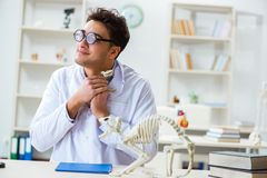 The funny crazy student doctor studying animal skeleton. Funny crazy student doctor studying animal skeleton Stock Photo