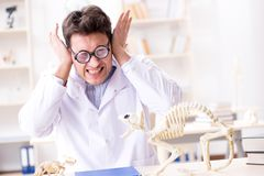 The funny crazy student doctor studying animal skeleton. Funny crazy student doctor studying animal skeleton Stock Image