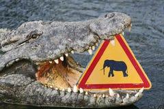 Funny crocodile Royalty Free Stock Photos