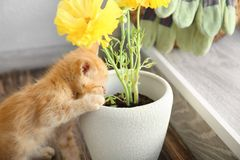 Funny curious kitten with houseplant indoors stock photography