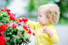 Funny curly hair toddler girl smelling red flowers Royalty Free Stock Photos